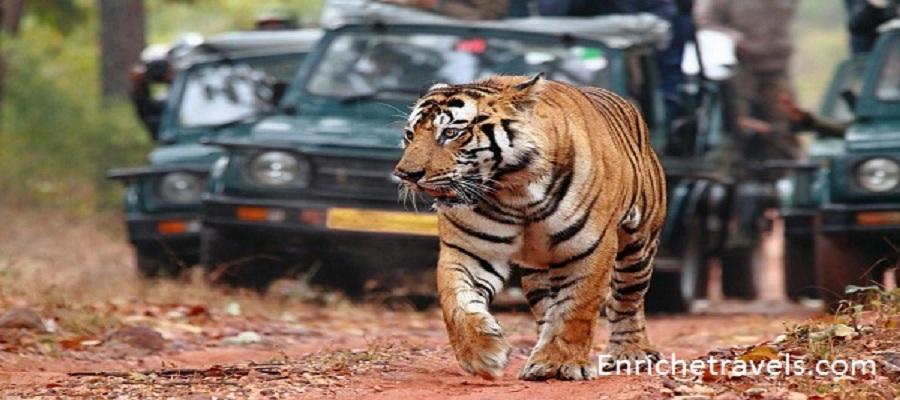 india-wildlife-tour1
