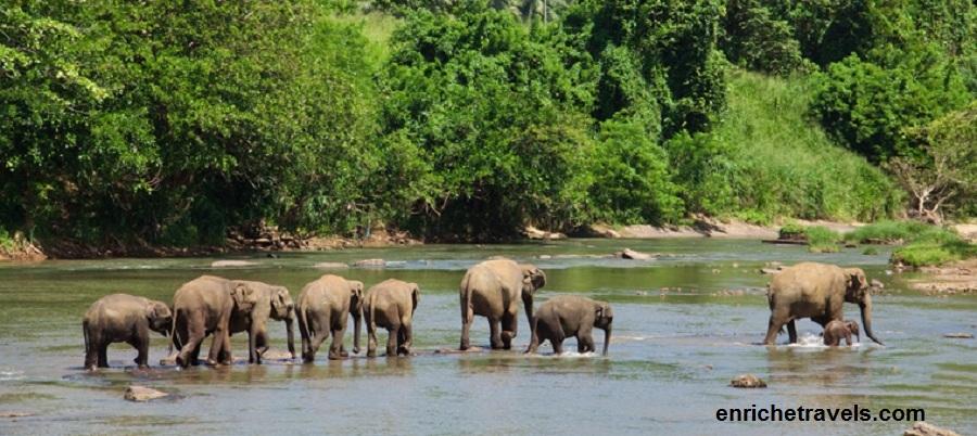 Elephants' family