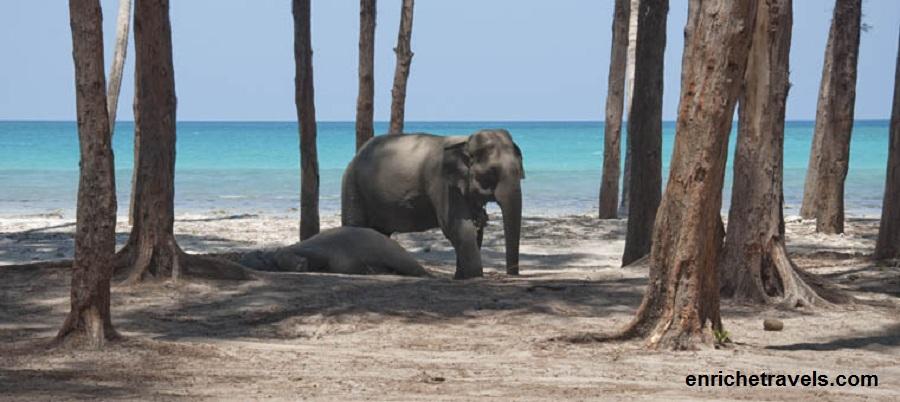 Andaman_Elephant_Beach