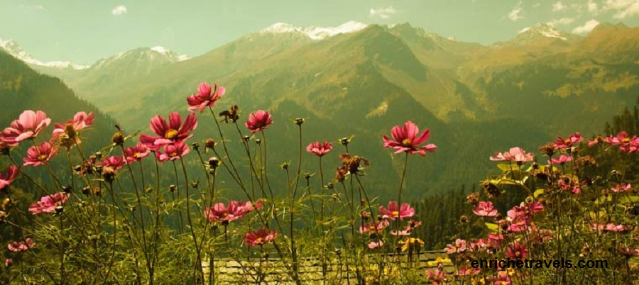 Nepal_Flower_and_mountains