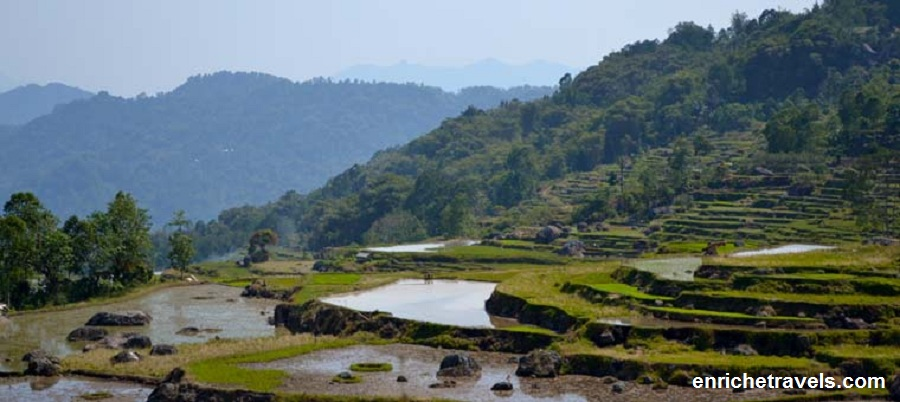 Paddy-fields---Toraja-_9_